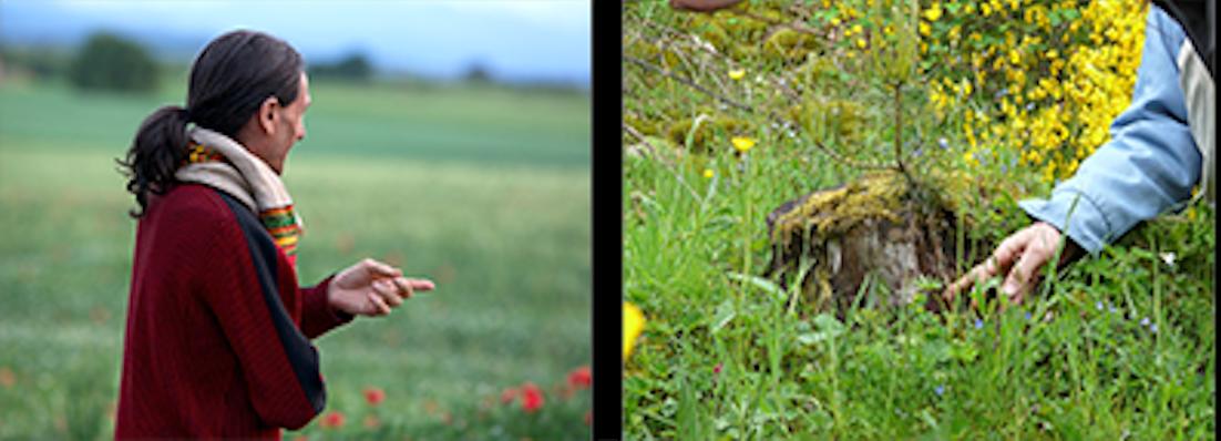 «Botanique & Espèces fondamentales pour la permaculture», formation du dimanche 12 au vendredi 17 juillet 2020 à Celon (36200), près de Châteauroux, Indre (France) avec Eric Escoffier